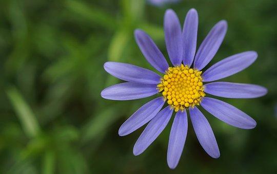 Purple Flower, Small, Tender, Nature, Beauty