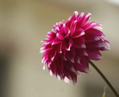 Garden, Flowers, Nature, Plant, Bloom, Spring, Blossom