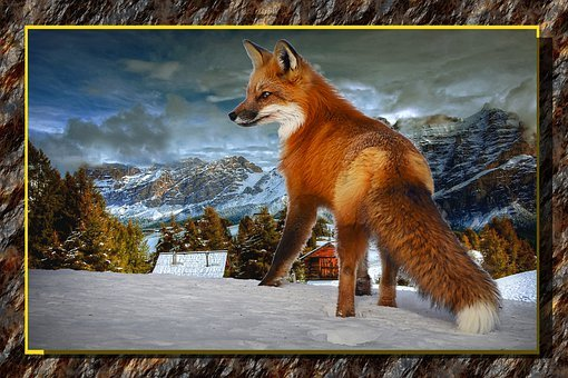 Assembly, Winter, Composition, Animal, Fox