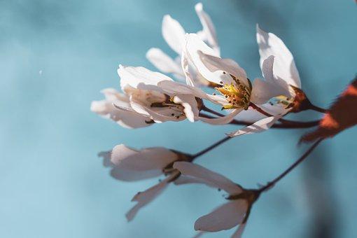 Flower, Spring, Blossom, Nature, White