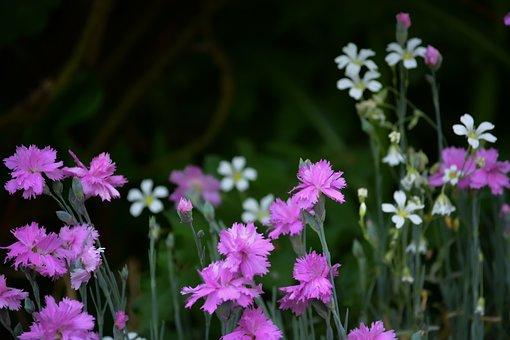 Flowers, Field, Meadow, Spring, Nature, Sun, Beauty