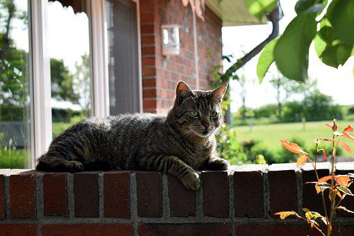 Cat, Wall, Animal, Domestic Cat, Concerns, Garden, Fur