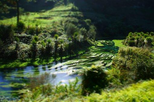 New Zealand, Landscape, Blue Springs