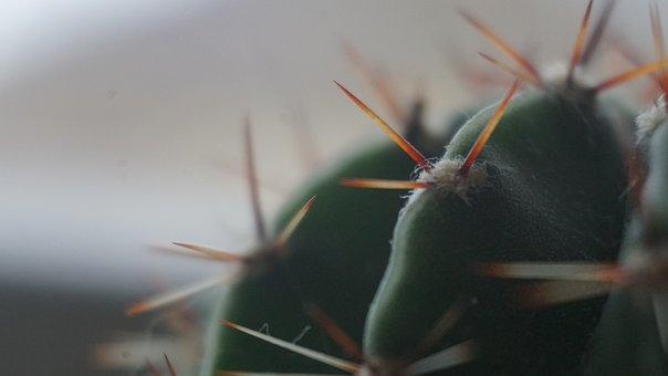 Cactus, Needle, Nature, Plant, Macro, Beautiful