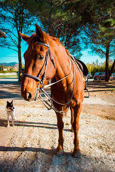 Horse, Animal, Jumper, Animals, Nature, Horses, Freedom