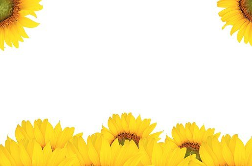 Sunflower, Handling, Autumn, Background