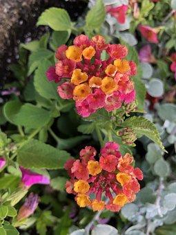 Plant, Nature, Flower, Green, Garden, Spring, Dandelion