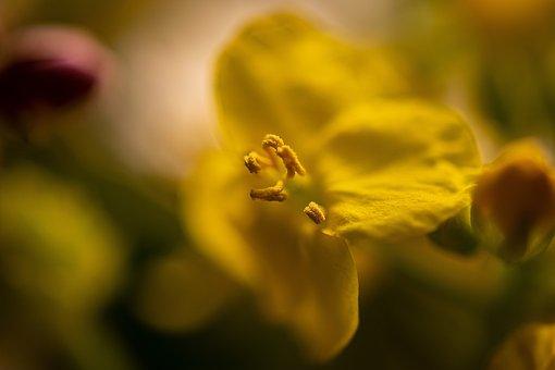 Flower, Sticks, Macro, Nature, Spring, Piestík
