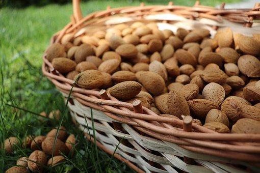 Almond, Raw Almonds, Badam, Nuts, Food, Fruits