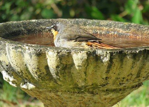 Bird, Birdbath, Bird Bath, Nature, Water, Bath, Animal
