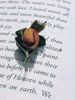Rosebud, Dried Rose, Book, Flower, Roses, Old Flowers
