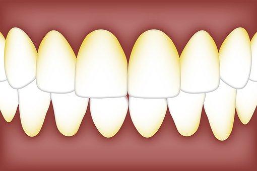 Dental, Plaque, Biofilm, Bacteria, Mouth, Tartar