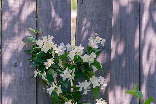 Fence, Flowers, Garden, Spring, Wood, Bloom, Summer