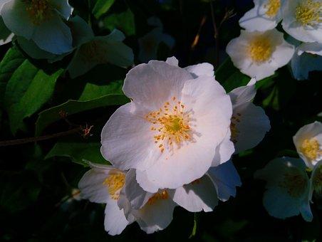 Garden, Flower, Tenderness, Stand By, Feelings, White