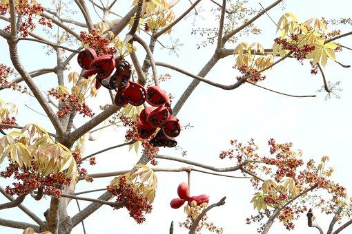 Sterculia Foetida, Bastard Poon Tree, Java Olive Tree