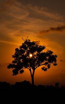 Tree, Shadow, Nature, Light, Landscape