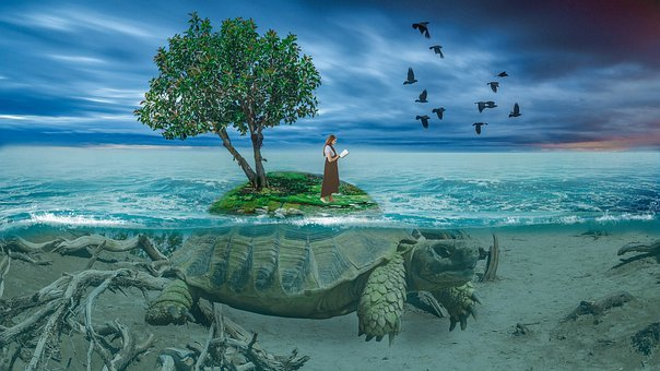 Turtle, Tree, Nature, Trees, Landscape, Water, Animal