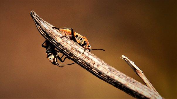 Insects, Beetle Sticks, Bph, Deep, Moth, Animal