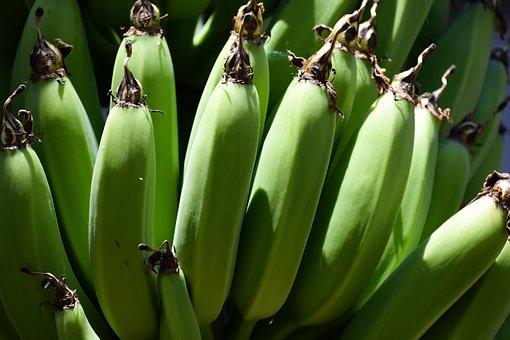 Banana, Unripe, Fruit, Green, Food, Fresh, Bunch