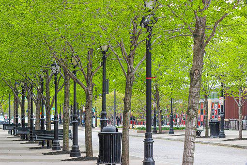 City, Trees, Lights, Walkway, Urban, Road, Architecture