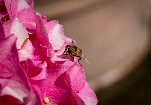 Macro, Insect, Flower, Violet, Bee, Api, Spring