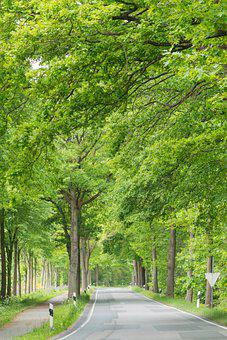 Avenue, Road, Trees, Forest, Nature