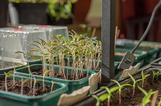 Young Plants, Growing Trays, Seedlings