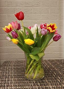 Tulip, Tulips, Flowers, Spring, Garden, Netherlands