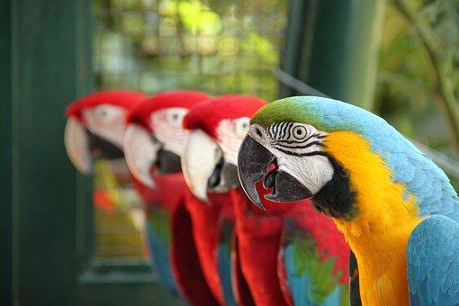 Arara, Nature, Bird, Tropical Birds, Birds