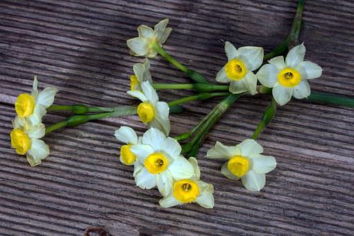 Daffodils, Flowers, Wood, Background
