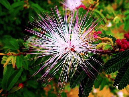 Flower, Manacá, Garden, Brazilian Landscape, Beautiful