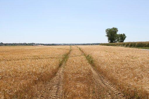 Agriculture, Blue, Bread, Copy, Copyspace, Copy-space