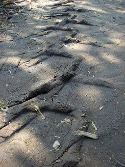 Tire Tracks, Path, Field, Print, Tractor, Tire, Clay