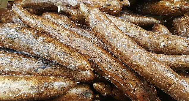 Yuca, Cassava, Vegetable, Food, Grocery, Manioc