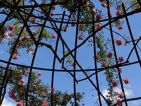 Rosary, Botanical Garden, Spring, Frame, Metal, Garden