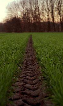 Tire Path, Green, Wheat, Path, Tire, Track, Road