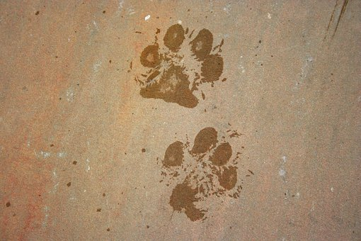 Animal, Background, Dog, Foot, Footprint, Mark, Paw
