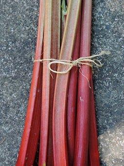 Rhubarb, Red Rhubarb Stems Attached, Edible Plant