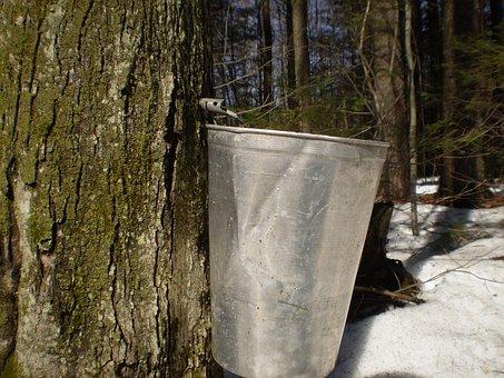 Maple, Sugar Season, Boiler, Syrup, Seasonal, Forest