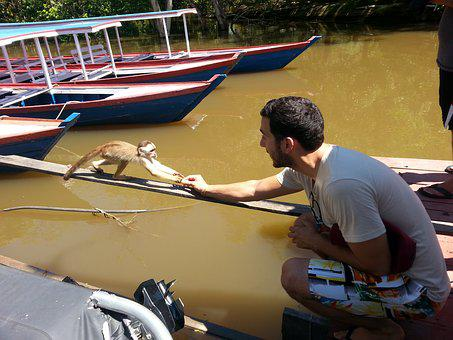 Monkey, Brazil, Feeding, Animals, Wildlife, People