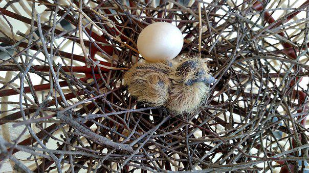 Chick, Egg, Baby, Chicks, Bird, Eggs, Nature, Feather