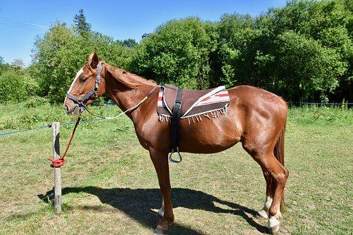 Horse, Horse Walker
