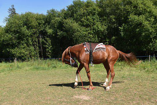 Horse, Horse Walker, Horse Mat Up A Flood, Carpet Horse