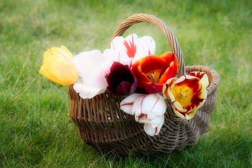 Tulips, Basket, Flowers, Spring, Nature, Easter, Garden