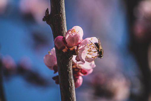 Spring, Bloom, Blossom, Floral, Nature, Garden, Flora