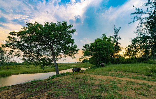 Country, River, Tree, Landscape, Outdoors, Nature, Sky