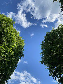 June, Trees, Calm, Life, Sky, Earth, Natural, Fresh