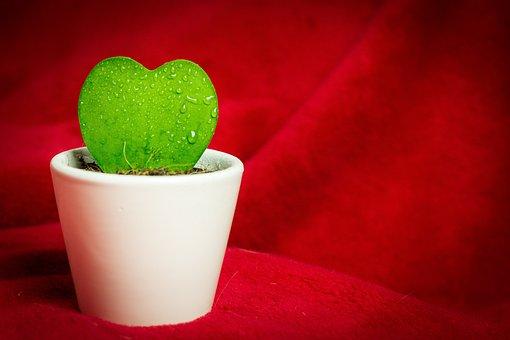 Heart, Cactus, Photography, Macro, Green Plant, Love