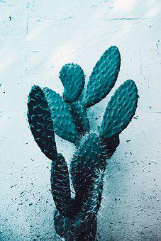 Cactus, Plant, Plants, Nature, Green, Garden, Kitchen
