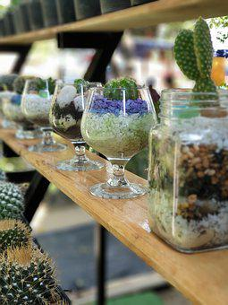Do Plants, Potted, Cactus, Glass